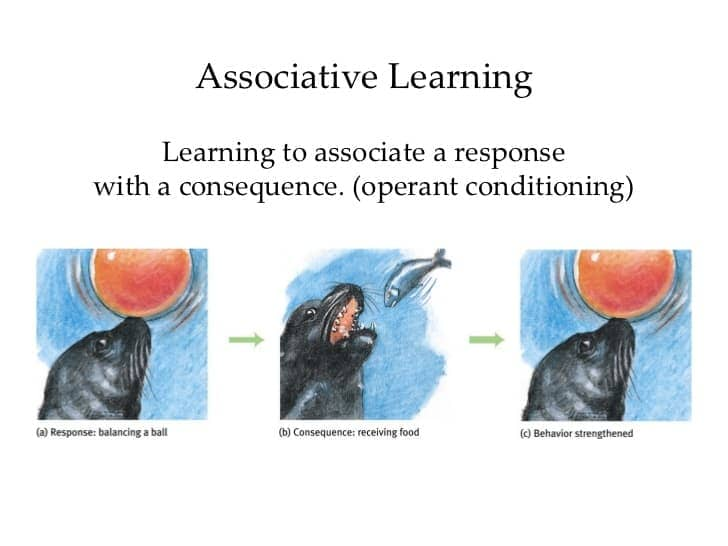 Image result for Associative learning