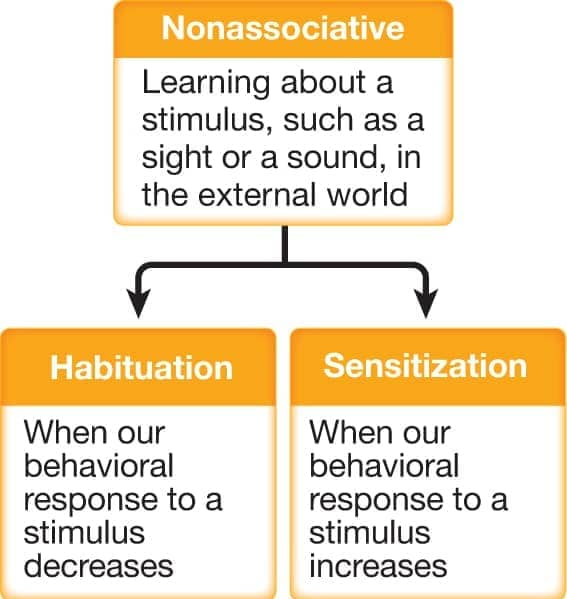 Image result for habituation sensitization